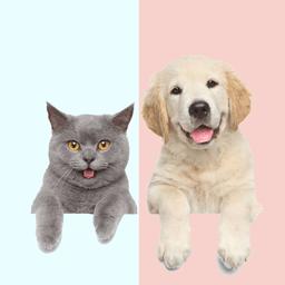 宠物猫狗翻译器免费版