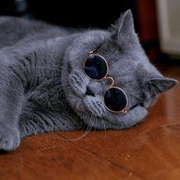 抖音五只貓搖頭表情包